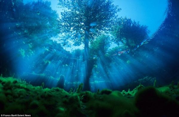 """شاهد: روعة وإبهار """"الربيع"""" من تحت الماء!!"""