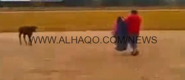 فيديو: جزاء قاس لرجل صارع عجلاً صغيراً مستهيناً به