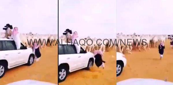 فيديو: سيارة تصدم شخصاً ولا تبالي به لتتابع تصوير الإبل