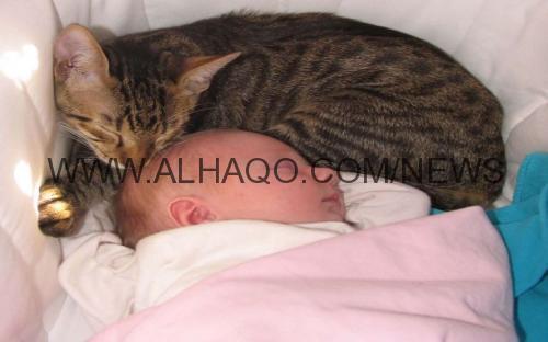 قطة تنقذ حياة رضيع من البرد