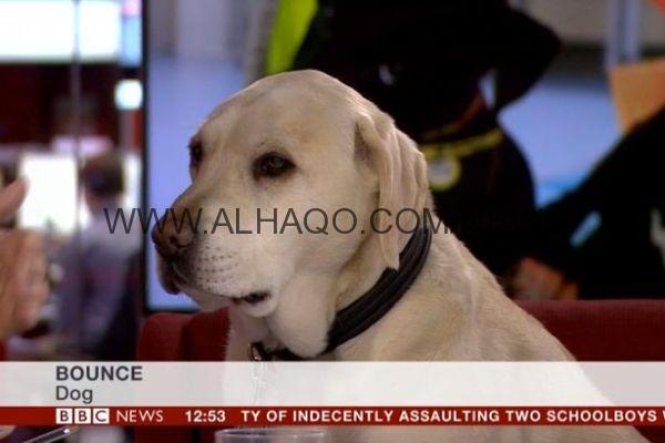فيديو: BBC تستضيف كلبًا على الهواء في برنامج تلفزيوني