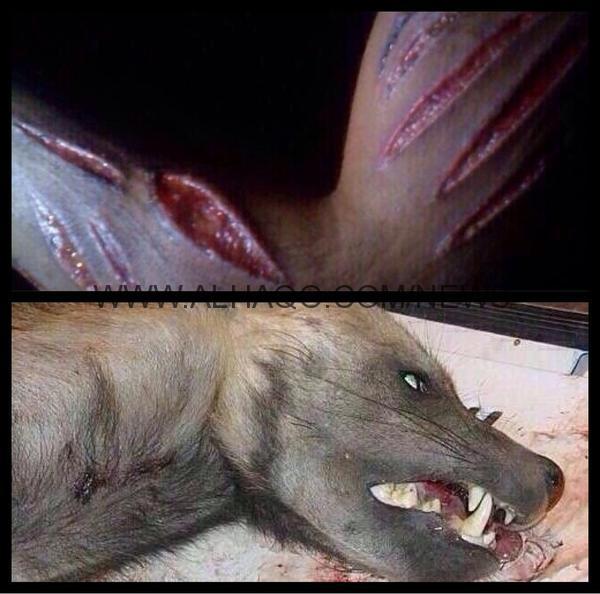 مدني جازان : لا صحة لوجود حيوانات مفترسه تهاجم أهالي القرى الجبلية