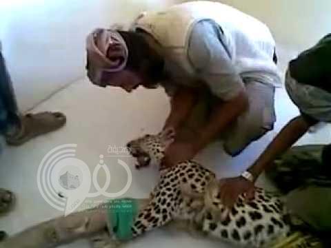 فيديو: يمني يصطاد فهد ويقيده بالحبال