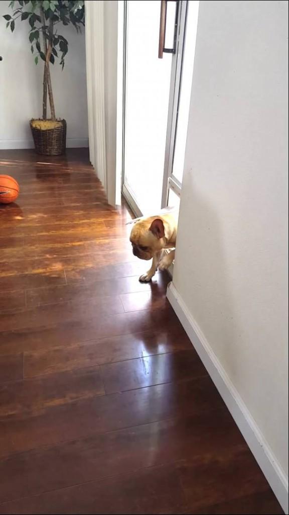 فيديو: كلب يشعر بالذنب لمضغ قلم صديقته