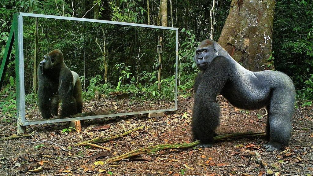 فيديو: 9 مليون مشاهدة لرد فعل حيوانات ترى نفسها في المرآة