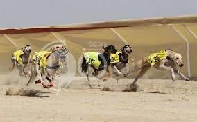 إمارة جازان توقف سباقاً للكلاب بعد مطالبات عديدة بوقفه
