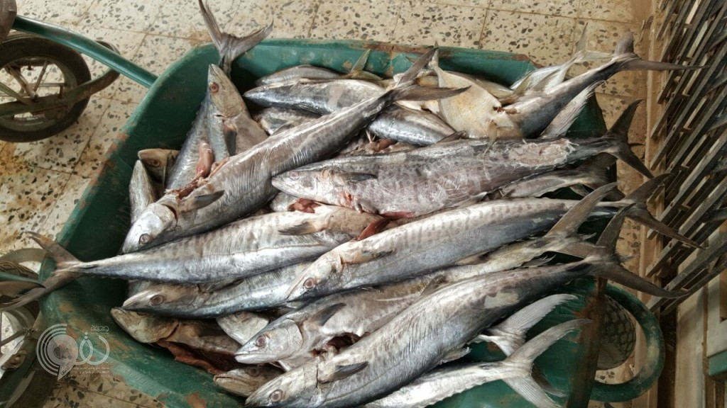 مصادرة ٤٠٠ كليو من الأسماك غير صالحة للاستهلاك الآدمي بأحد المسارحة