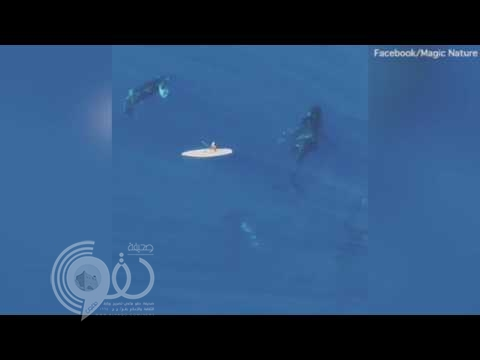 3 ملايين مشاهدة لهذا الفيديو المرعب من المحيط الهادئ!