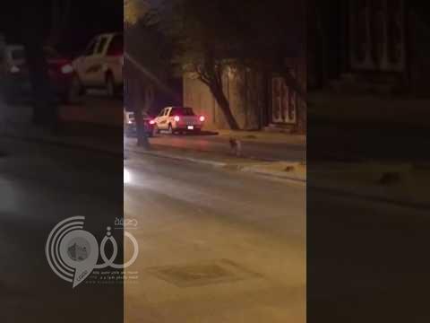 """شاهد بالفيديو .. """"فهد"""" يهرب ويتجول في شوارع بريدة"""