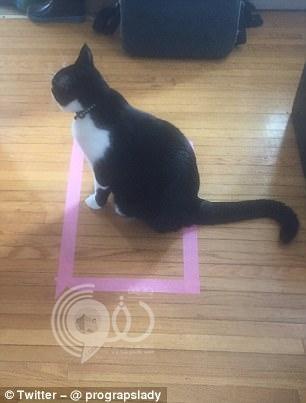 شاهد بالصور.. العلم يقف عاجزًا أمام هذا التصرف الغريب من القطط