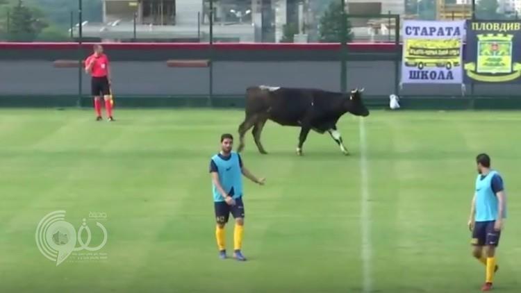 بالفيديو.. ثور وكلب يقتحمان مباراة لكرة القدم!