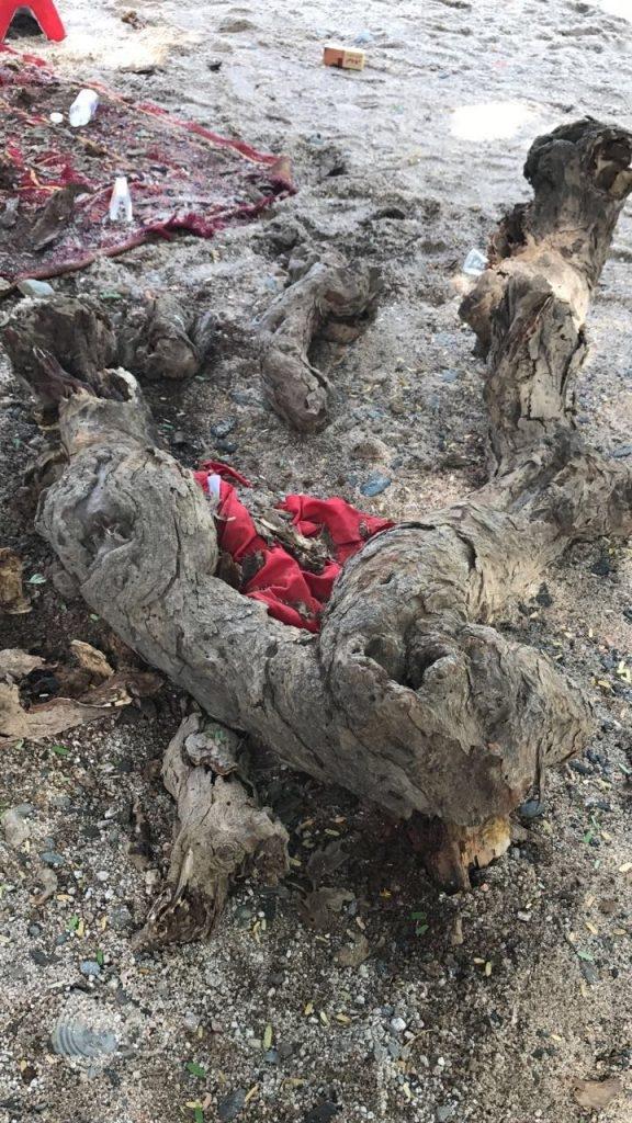 نجاة شابين من الموت بعد سقوط أجزاء كبيرة من شجرة عملاقة في وادي الرزان