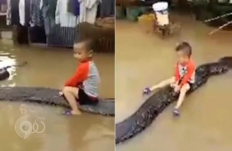 شاهد: طفل 3 سنوات يلعب على ظهر حية عملاقة