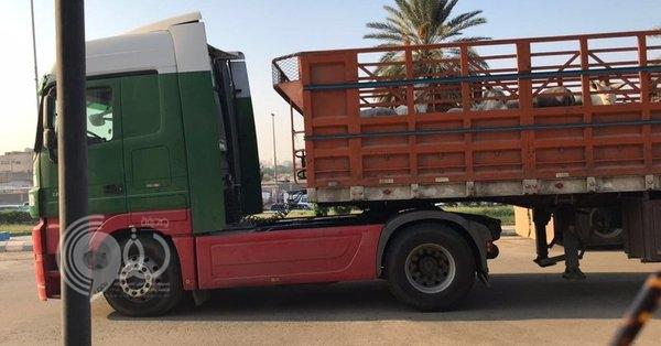 ضبط شاحنة محملة بالحمير قادمة من جازان قبل دخولها جدة والتحفظ على قائدها