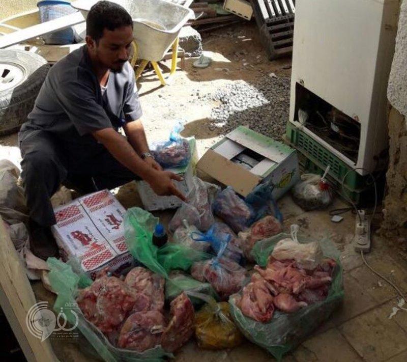 شاهد .. ضبط ربع طن دجاج فاسد في سكن عمالة في أبوعريش