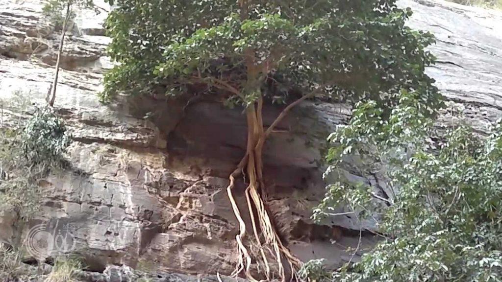 بالفيديو الصور.. مشاهد بديعة لوادي الأشجار المعلقة في جازان.. وهذه أبرز المعلومات عنه