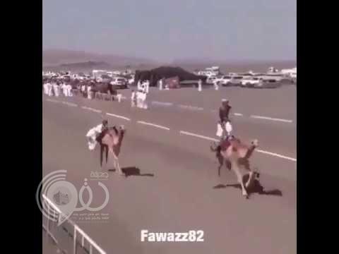 بالفيديو.. سقوط مروع لمتسابق من فوق جمل