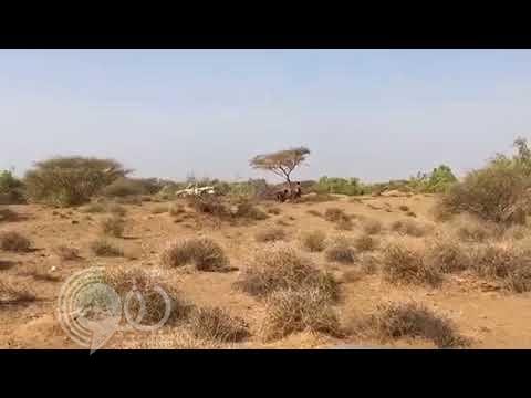 بالفيديو.. مواطن يوثِّق عمالة تقوم بالاحتطاب الجائر بوادي صلب في الشقيق