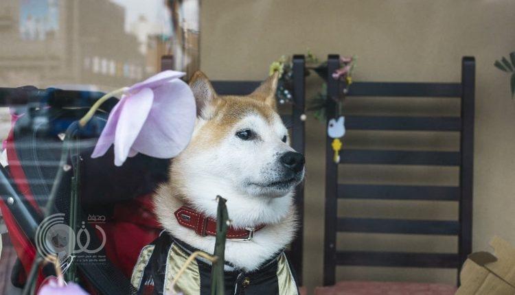 تعيين كلب في وظيفة ناظر محطة قطار السياحة باليابان
