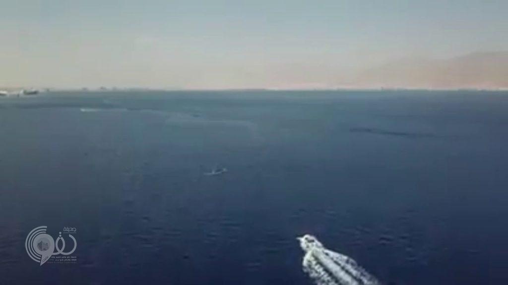 لأول مرة.. شاهد.. أضخم كائن على وجه الأرض يظهر في مصر