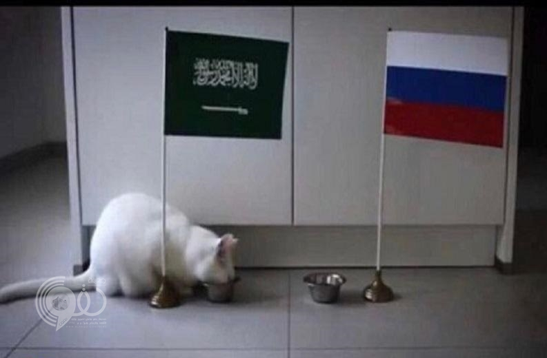 """القط الأصم """"أخيل"""" يُفاجئ الجميع بتوقعاته لنتيجة مباراة """"روسيا والسعودية"""".. واللجنة المنظمة تعتمد نتائج توقعاته"""