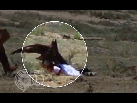 شاهد بالفيديو: نسر عملاق يحاول خطف طفلة ويصيبها بجروح بليغة
