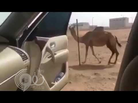 شاهد بالفيديو: شاب خليجي يسخر من تحدي كيكي على طريقته الخاصة