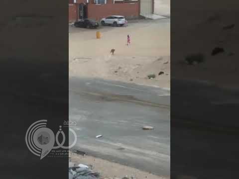 شاهد بالفيديو .. طفلة تنجو من هجوم كلب ضال بأعجوبة