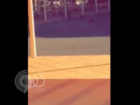 شاهد بالفيديو.. قرود تقتحم كلية بلقرن وتثير هلع الطالبات