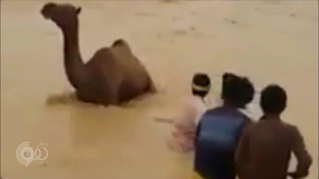 شاهد بالفيديو.. عملية إنقاذ مثيرة لجمل في سيول المهرة