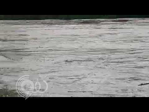 مشهد غريب.. حمار ينقذ كلاباً من الغرق داخل متنزه بالليث