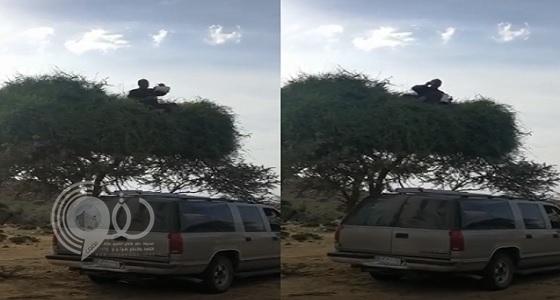 شاهد مواطن يحتسي فنجان القهوة فوق شجرة.. فيديو
