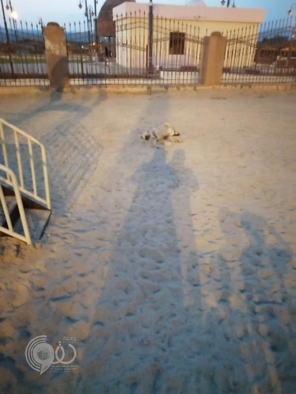 جازان.. جثة كلب متحللة بمنتزه في الحرث تكشف غياب الصيانة والنظافة