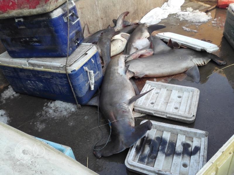 شاهد.. أسماك متعفنة وروائح كريهة وعمالة وافدة بسوق جازان