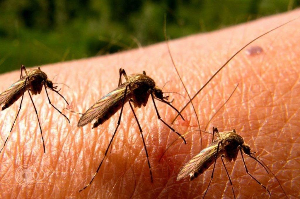أهالي أبو عريش يشتكون انتشار البعوض والأمراض الوبائية