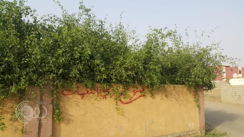 شاهد.. الأشجار تحاصر مقبرة قرية مجعر بصامطة والثعابين تغزو المنازل