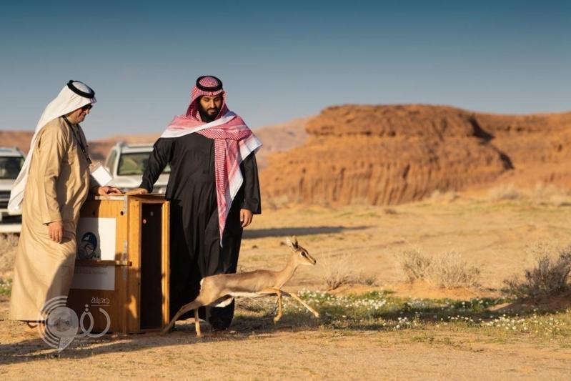 تحت رعاية محمد بن سلمان .. رؤية العلا تقود العالم في رحلة عبر الزمن مع التراث والطبيعة