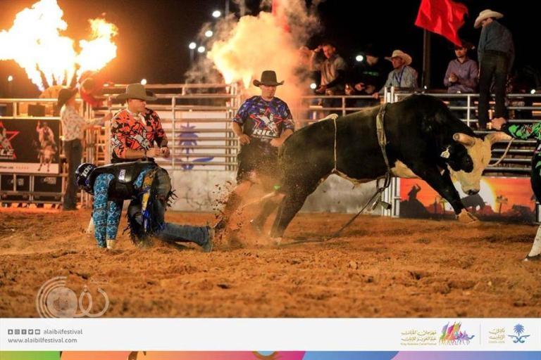 بالفيديو والصور.. تحدي الثيران يحبس الأنفاس بمهرجان الملك عبدالعزيز للإبل