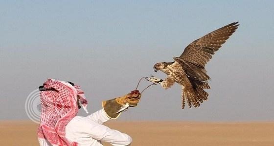 توظيف 50 صقراً لتوصيل الطلبات بين المملكة والإمارات !!