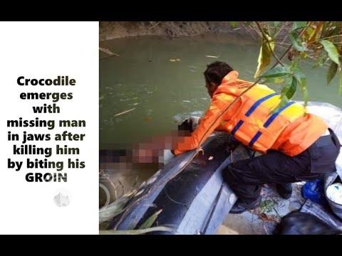 فيديو مروع.. رجل بين فكيْ تمساح