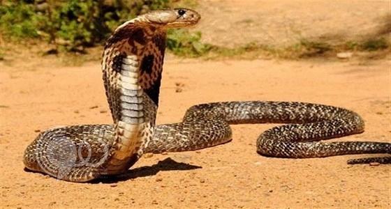 حقيقة وجود أطول ثعبان في العالم بالمملكة.. صورة