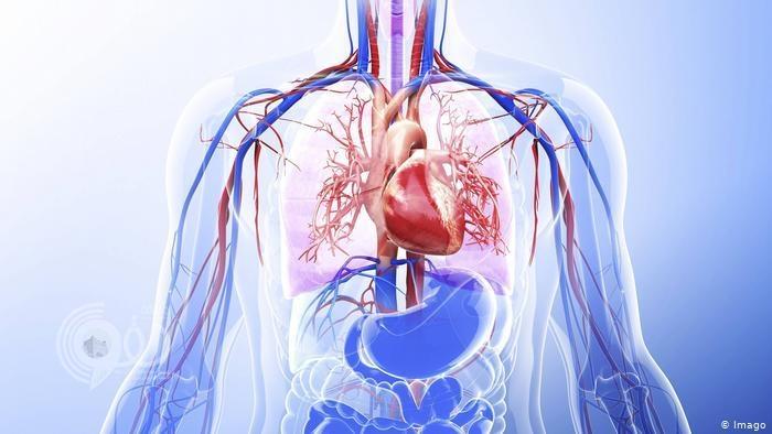 تعرّف إلى تأثير الصيام على جسم الإنسان .. شائعات وحقائق