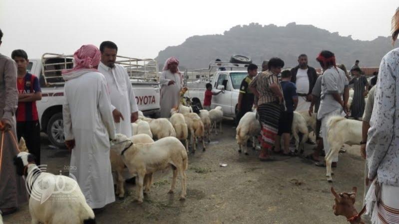 رفع أسعار المواشي 45 % بجازان قبل رمضان
