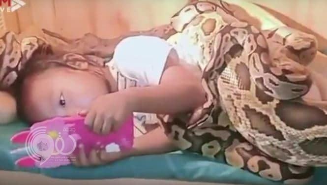شاهد.. فيديو مرعب لثعابين ضخمة تحيط بطفلة أثناء مشاهدتها فيلما كرتونيا