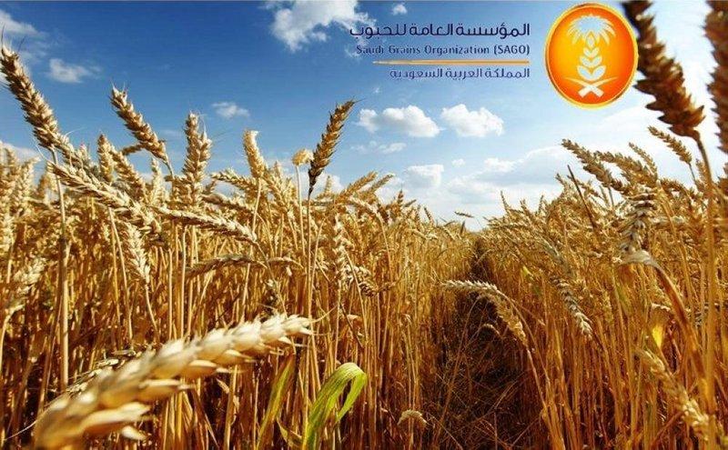 """""""الحبوب"""" تُرسي الدفعة الأولى من الشعير بوزن 900.000 طن"""