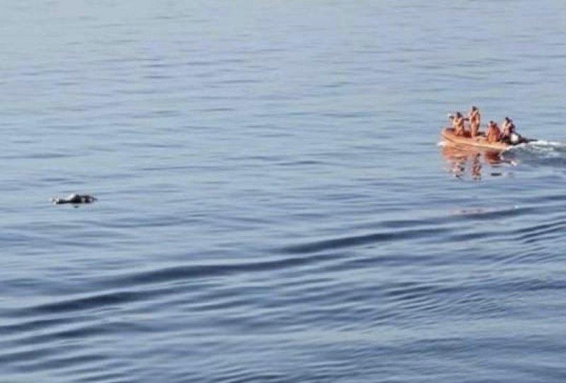 طاقم عبّارة ركاب ينتشل جثة غريق بالقرب من جزر فرسان