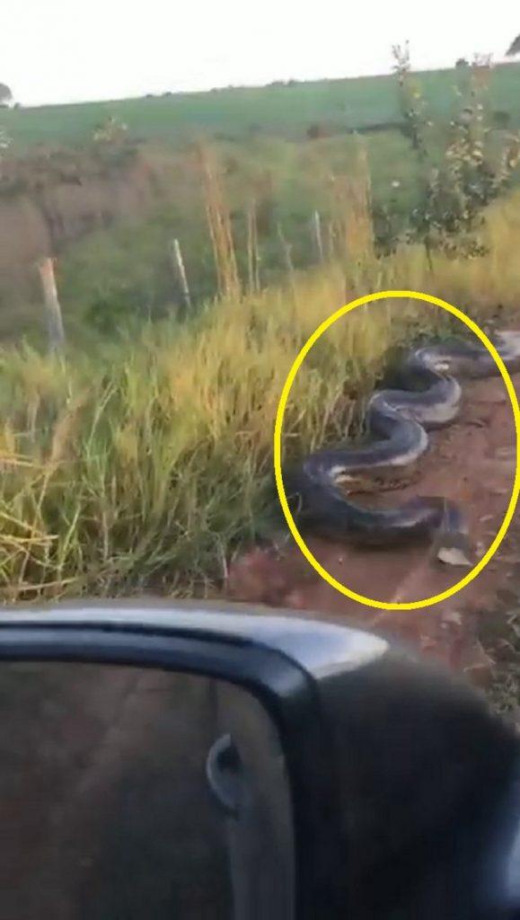 فيديو مرعب: حية أناكوندا توقف شاحنة وتهاجم ركابها على الطريق