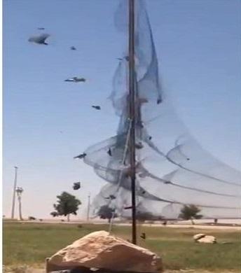 """شاهد: أشخاص يصطادون أعداد كبيرة من الطيور بعد """"نصب فخ"""" في أحد المتنزهات"""