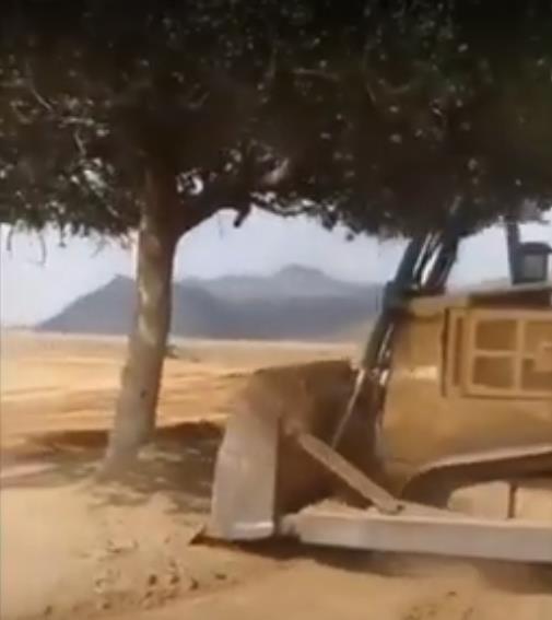 """متحدث """"البيئة"""" يعلق على فيديو إزالة الشجرة المعمرة في جازان.. والعقوبة التي تنتظر المتعدي"""