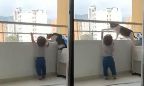 """شاهد.. فيديو مثير لردة فعل """"قطة"""" تجاه طفل حاول تسلق الشرفة!"""